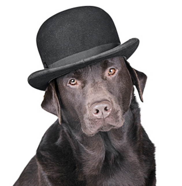 dog-in-hat