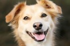 APHappyDog_resized