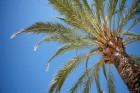 Palm-tree-wallpaper_resized