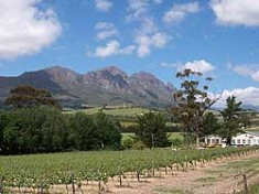 south-africa-walking-wine