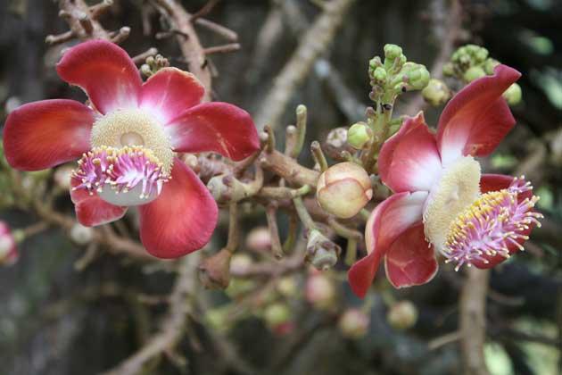 9-Peng-flowers-IMG_6235