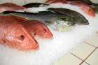 Fish_Corbis-42-34667973