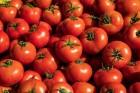 tomatoes_Corbis-42-37029506