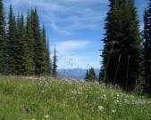trees-&-meadow