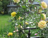autumn-garden_roses_feature