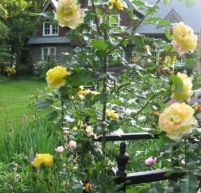 autumn-garden_roses_feature