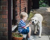 child-feeding-the-dog-a-treat-gettyimages