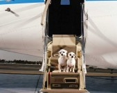 pet-carrier-Savvy-Traveller-Tips-2