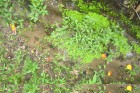 feature-weeds-in-stream-(2)[1]