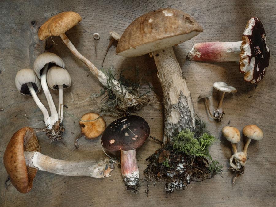 Various types of mushrooms