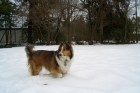 Cosimo-in-snow,-standing-(2)[1]