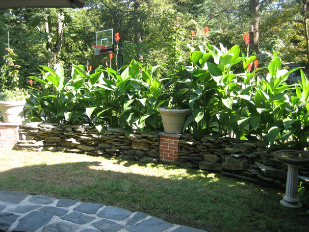 cannas-and-new-patio-area