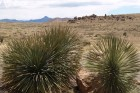 new-mexico-feature