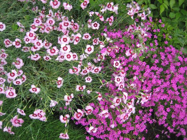 QM2-cruise,-Halifax-public-garden,-pinks-(2)