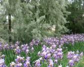 gardener-(1)