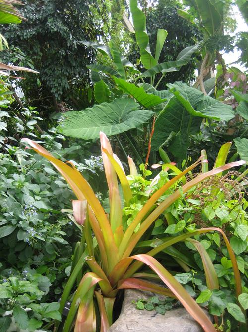 gardener-4-Tropical-leaves-3,-Denver-Botanical-Gardens
