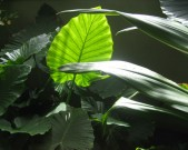 Tropical-leaves-FEATURE-Denver-Botanical-Gardens