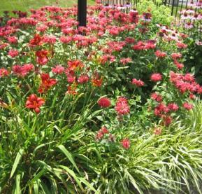 monarda,-echinacea,-red-daylilies,-Moorestown