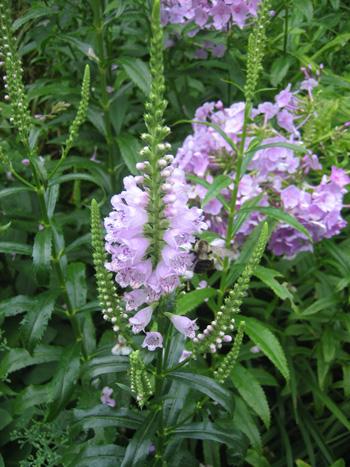 The Spiritual Gardener: Cicadas and Fireflies - Everything Zoomer