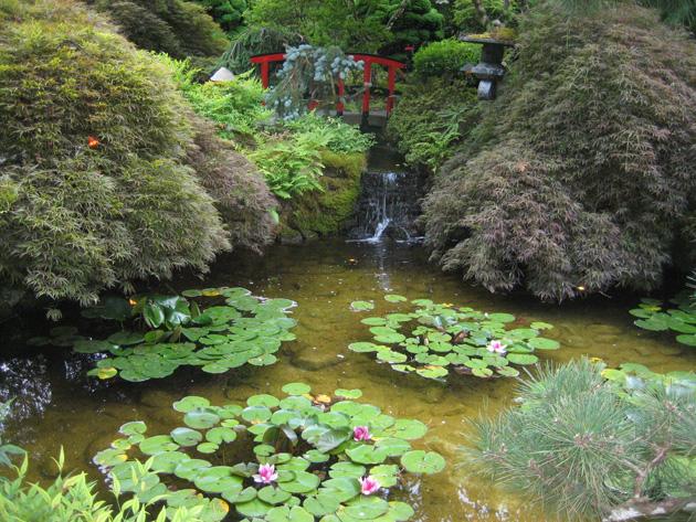 Butchart-Garden-3-pond-and-red-bridge,-Japanese-Garden
