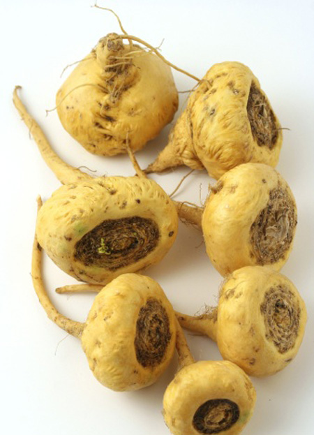 superfoods-5-maca-root