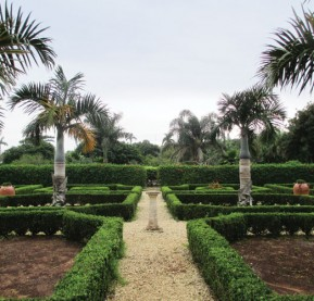 Boxwoods_palms_bermudagardens