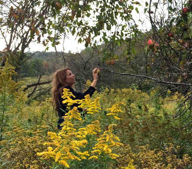 Glendorn-Apple-Picking