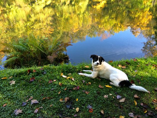 glendorne-pup-in-pennsylvania