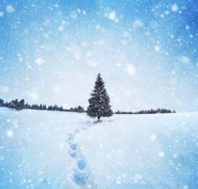 holiday-winter-tree