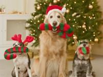 christmas-dogs