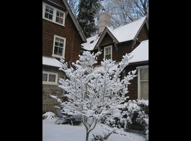 maples-2-snow-on-young-dogwood