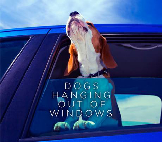 pets-Dogs-Hanging-Out-of-Windows-jacket
