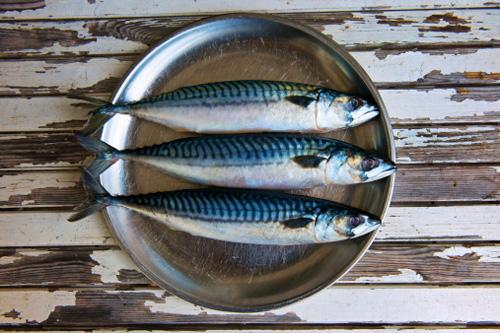 6-fish