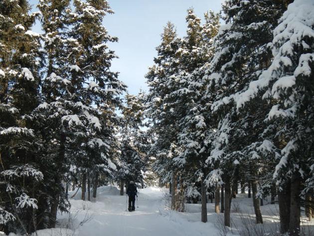 8-snowshoeing