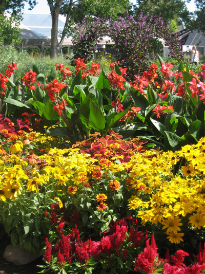 5-red-cannas-with-red-and-yellow-flowers,-Denver-Botanic-Gardens