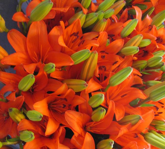 7-Pike-Street-Market,-Seattle_-tiger-lilies