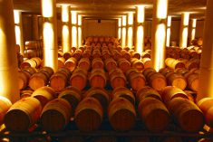 A sampling of the 3,000 barrels of wine in the winery cellar owned by Count Francesco Mazzei of Fonterutoli's family for centuries.
