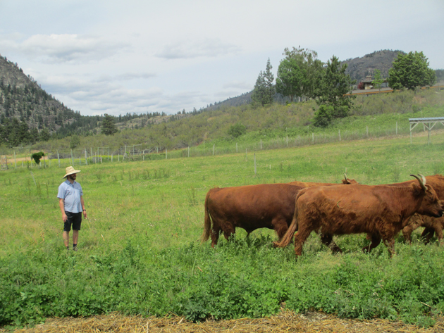 Walking with the animals, farmer Gene at Covert Farms