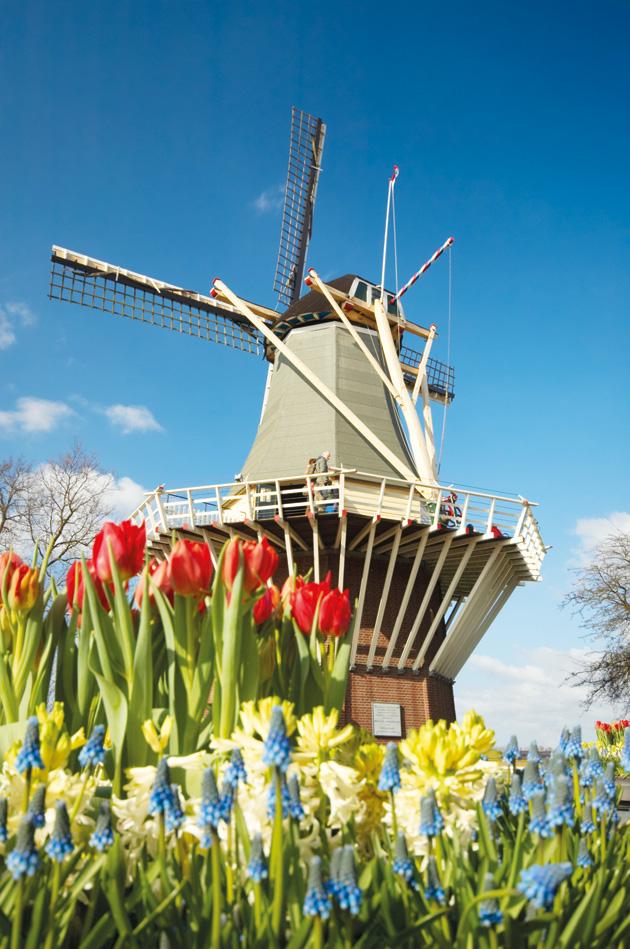Amsterdam-Windmill-May-'11-93818926
