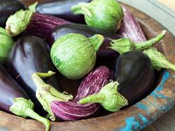 Eggplant_250x188