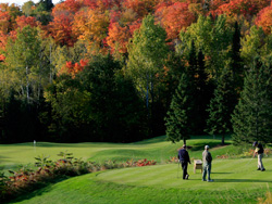 dr-zoomer-fall2015-golf