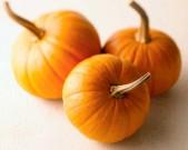 Halloween-pumpkins-feature-610x610