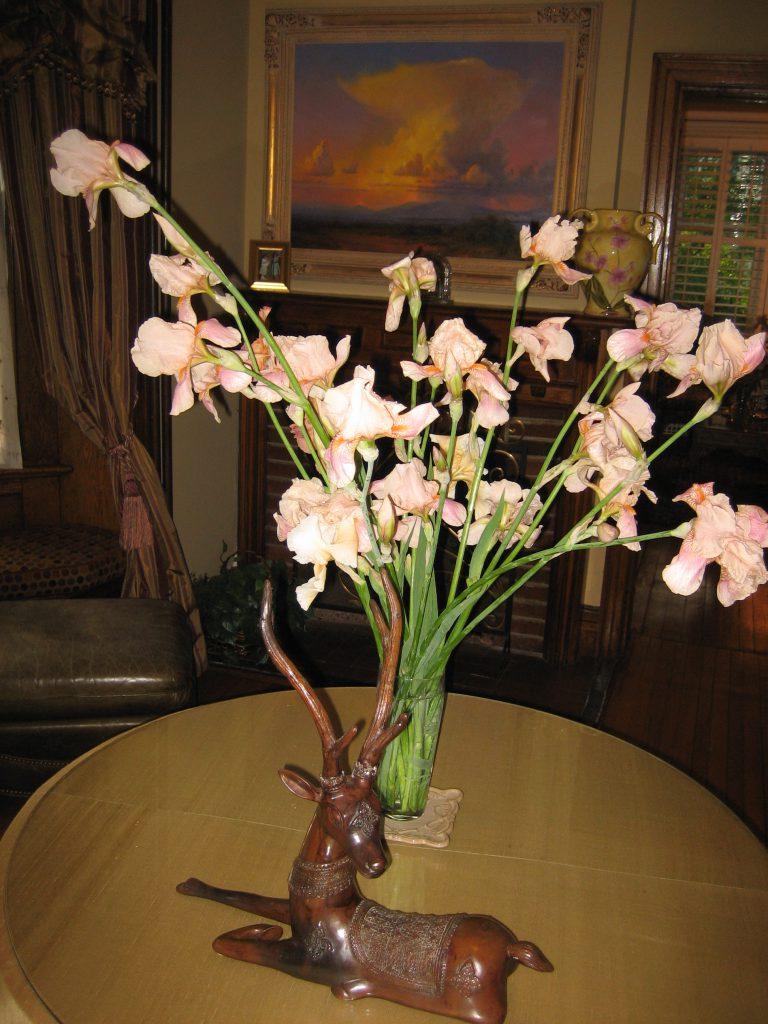 irises, pink, in vase