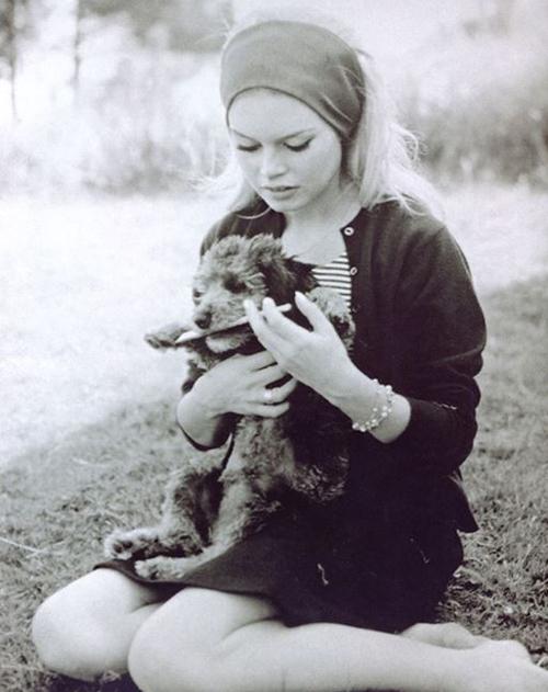 brigitte-dog