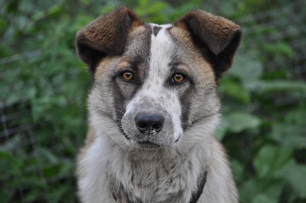 dog-1424504_960_720