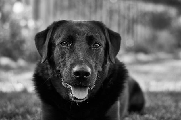 dog-1539118_960_720
