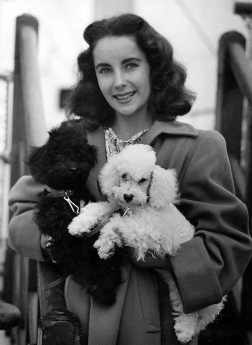 elizabeth-taylor-and-poodles