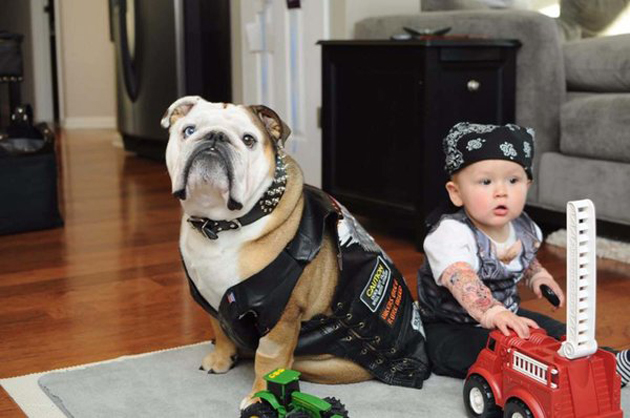 dogshumans