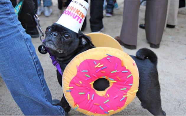 donutdog