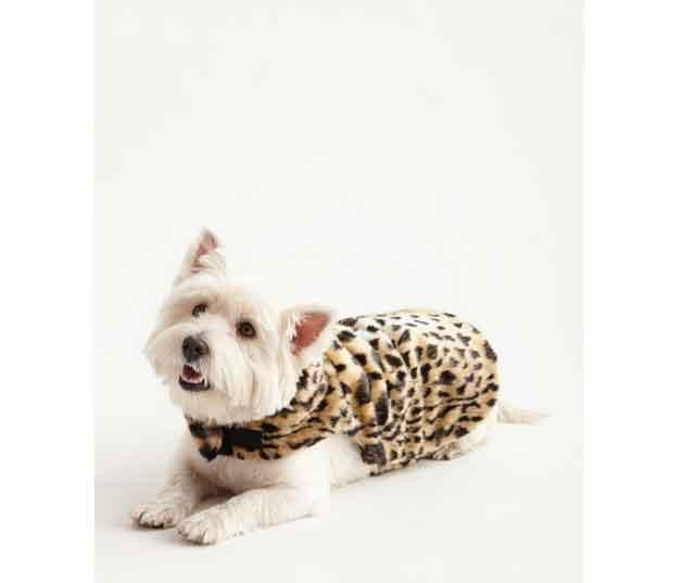 dog-leopard-coat